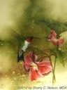 "30. Ruby-throated Hummer with Trillium, 9"" x 12"" - $155.00"