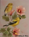 "American Goldfinches with Rose of Sharon    8"" x 10""  $7.00"
