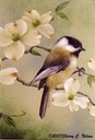 "Black-capped Chickadee with Dogwood. 8""x10"". $7.00"