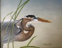 "Great Blue Heron with Horsetail.  14""x11"". $8.00"